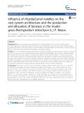 Influence of rhizobacterial volatiles on the root system architecture and the production and allocation of biomass in the model grass Brachypodium distachyon (L.) P. Beauv.