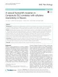 A natural frameshift mutation in Campanula EIL2 correlates with ethylene insensitivity in flowers