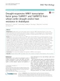 Drought-responsive WRKY transcription factor genes TaWRKY1 and TaWRKY33 from wheat confer drought and/or heat resistance in Arabidopsis