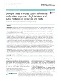 Drought stress in maize causes differential acclimation responses of glutathione and sulfur metabolism in leaves and roots