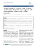 The Arabidopsis CURVY1 (CVY1) gene encoding a novel receptor-like protein kinase regulates cell morphogenesis, flowering time and seed production