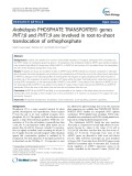 Arabidopsis PHOSPHATE TRANSPORTER1 genes PHT1;8 and PHT1;9 are involved in root-to-shoot translocation of orthophosphate