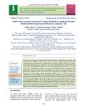 Ophiocordyceps pulvinata induces caspase-dependent apoptosis through mitochondrial impairment in human leukemia cells