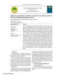 Nghiên cứu tỷ lệ phối trộn giá thể hữu cơ làm bầu ươm cây giống keo lai BV10, BV33 sản xuất bằng phương pháp nuôi cấy mô