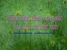 Bài giảng Ngữ văn 10: Những yêu cầu về sử dụng tiếng Việt