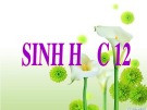 Bài giảng Sinh học 12 - Bài 35: Môi trường và các nhân tố sinh thái