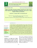 Studies on the effect of sowing techniques and seed rate on the growth, yield components and yield of direct seeded rice (Oryza sativa L.) under rainfed medium land situation