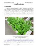 Hội thi nghiên cứu khoa học kỹ thuật - Môn Sinh học: Hiệu quả kinh tế từ việc tái sử dụng thùng xốp trồng nha đam Mỹ