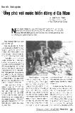 Ứng phó với nước biển dâng ở Cà Mau