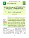 Nutrient management in different rice (Oryza sativa L.) establishment methods under black clay soils of tungabhadra command