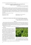 Nghiên cứu kỹ thuật nhân giống cây tục đoạn (Dipsacus japonicus)