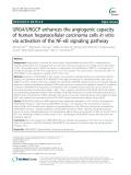 URG4/URGCP enhances the angiogenic capacity of human hepatocellular carcinoma cells in vitro via activation of the NF-κB signaling pathway