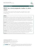 ROCK1 as a novel prognostic marker in vulvar cancer