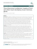 Three dimensional multiphoton imaging of fresh and whole mount developing mouse mammary glands