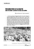 Thử nghiệm trồng cây sa nhân tím dưới tán rừng tự nhiên ở huyện Con Cuông
