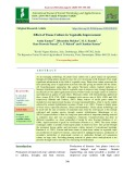 Effect of tissue culture in vegetable improvement