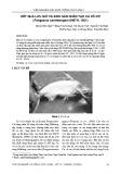 Kết quả lưu giữ và sinh sản nhân tạo cá vồ cờ (Pangasius sanitwongsei Smith, 1931)