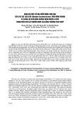 Đánh giá một số đặc điểm nông sinh học của các vật liệu sắn (Manihot esculenta Crantz) trên đồng ruộng và sàng lọc khả năng kháng bệnh khảm lá CMV trong điều kiện lây nhiễm nhân tạo bằng phương pháp ghép