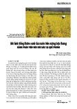 Mô hình trồng thâm canh lúa nước trên ruộng bậc thang bằng phân viên nén dúi sâu tại Quế phong