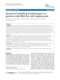 Dynamical modelling of phenotypes in a genome-wide RNAi live-cell imaging assay