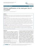 Histone modifications in the male germ line of Drosophilaa