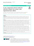 A new sequential animal model for infection-related non-unions with segmental bone defect