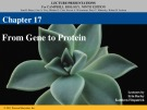 Lecture Campbell biology (9th edition) - Chapter 17: From gene to protein