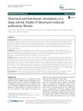 Structural and functional correlations in a large animal model of bleomycin-induced pulmonary fibrosis