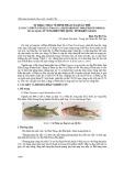 Sự khác nhau về hình thái của quần thể loài cá phèn Upeneus tragula richardson, 1846 (Perciformes: Mullidae) ở vùng biển Phú Quốc, tỉnh Kiên Giang