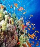 Giáo trình Sinh thái thủy sinh vật