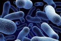 Những BG thú vị Các yếu tố ảnh hưởng đến sinh trưởng của vi sinh vật - Sinh 10