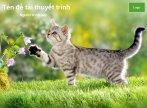 Hình nền powerpoint động vật - con mèo