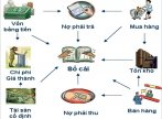 Bộ sưu tập hình ảnh về kế toán tài chính