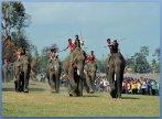 Bộ sưu tập hình ảnh lễ hội đua voi ở Tây Nguyên